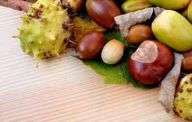 pic of cobnuts  - Cobnuts horse chestnuts acorns and autumn leaves form a diagonal border on a wooden background with copy space - JPG