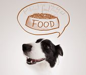stock photo of border collie  - Cute black and white border collie thinking about a bowl of food in a thought bubble above her head - JPG