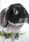 Bunny Rabbit On White Wooden Studio Background