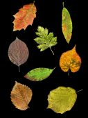 Leaves Of 8 Species In Autumn