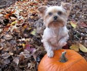 Pepper And The Pumpkin