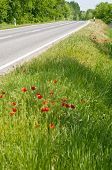 Poppies By The Road Vertical