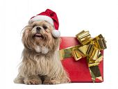 Shih tzu with christmas hat, sitting next to a present box, isolated on white
