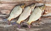picture of shaky  - Carp fish over old wooden plank board - JPG