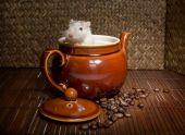 Coffee Rat