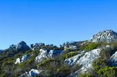 image of fynbos  - Fynbos vegetation at the top of Table Mountain - JPG