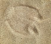Camel Foot Prints In Sand On Desert