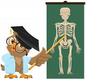 image of animal anatomy  - Owl teacher - JPG