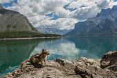 picture of chipmunks  - chipmunk on a lakeside rock with mountains in the background - JPG