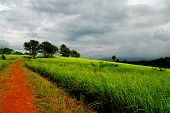 Way to Grassland in Khao Yai