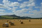 Lomond Hills View