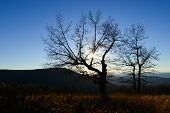 Autumn trees silhouette in Shenandoah National Park in Virginia, United States