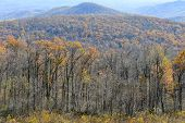 foto of virginia  - Foliage of Autumn forest in Shenandoah National Park in Virginia - JPG