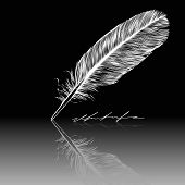 Feather, quill