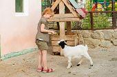 Little girl feeding the goat