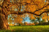 Autumn scenery with trees in sunshine