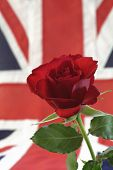 English Red Rose and Union Jack