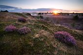 stock photo of ling  - gold sunrise over hills with flowering heather - JPG