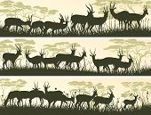 Horizontal Banners Of Wild Antelope In African Savanna.