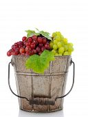 An old metal bucket full of fresh ripe red and green grapes. Vertical format on a white background with reflection.