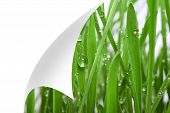 Fresh grass with dew drops close up,bent corner of the page