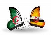 Two Butterflies With Flags On Wings As Symbol Of Relations Algeria And Brunei