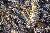 Moss On Stone. Close-up