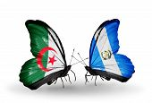 Two Butterflies With Flags On Wings As Symbol Of Relations Algeria And Guatemala