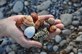 Sea Shells And Pumice Stones
