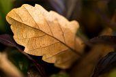 ������, ������: Fall Colors Brown