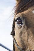 Horse eye on sky background