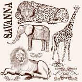 Collection Of Vector Hand Drawn Savanna Animals