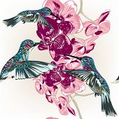 Floral Seamless Pattern With Hummingbirds And Orchid Flowers