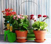 Beautiful flowers in flowerpots, on wooden background