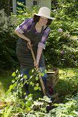 Woman With Spade In A Garden