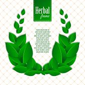 Herbal eco wreath of natural green leaves