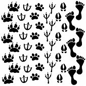 People And Pets Footsteps