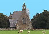 Pastoral scene church belltower and lambs