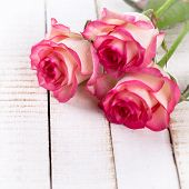pic of rose  - Background with fresh flowers roses in ray of light and empty place for your text - JPG