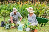 picture of grandfather  - Happy grandmother and grandfather gardening on a sunny day - JPG
