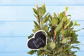 picture of bay leaf  - Fresh green bay leaves on wooden background  - JPG
