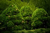 foto of fireflies  - fluffy green bushes with firefly effect in the park - JPG