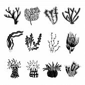 stock photo of biodiversity  - Tropical ocean coral black decorative icons set isolated vector illustration - JPG