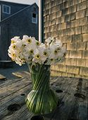 picture of shingles  - White narcissus in a glass vase on a wooden table against a building with wooden shingles in Menemsha Massachusetts on Martha - JPG