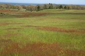 image of martha  - Beautiful farm field with sea in the background on Martha - JPG