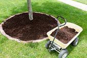 image of wheelbarrow  - Mulch work around the trees growing in the backyard during springtime with a small yellow metal wheelbarrow full of organic mulch from the nursery standing alongside a round flowerbed around a sapling - JPG