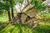 picture of hurricane wind  - Old Barn Damaged By Recent Hurricane - JPG