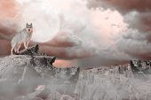 picture of wolf moon  - Wolf Standing on the Mountains under a Moon Lit Sky - JPG