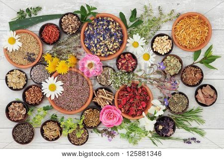 Large medicinal herb and flower selection used in natural alternative medicine over distressed woode