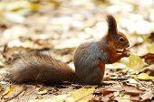 ardilla en bosque de otoño